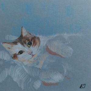Кошка Пышка