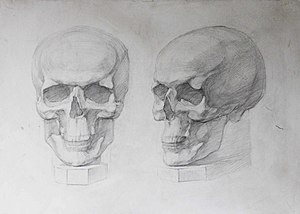 2 черепа