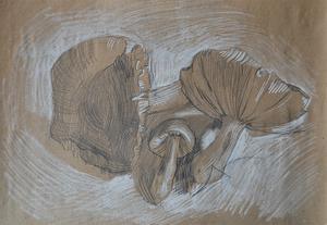 Зарисовка сыроежек