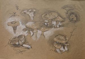 Зарисовка грибов