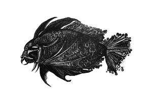 """""""Фантазийная рыба"""""""