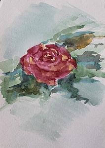 Роза_2