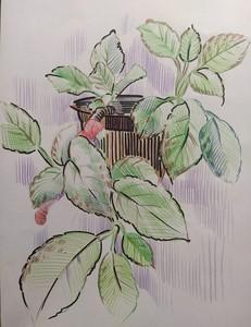 Ботаническая зарисовка